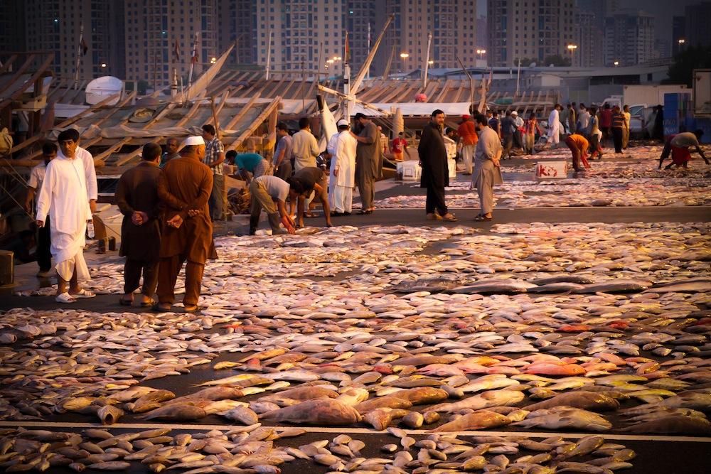 Ajman Fish Market   HX Report