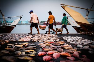 Fishermen - Unloading The Fish