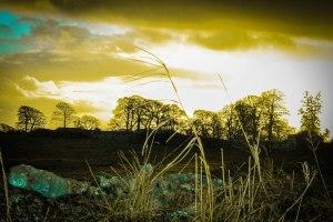 Sky yellow