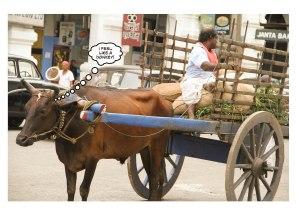 DonkeyMar