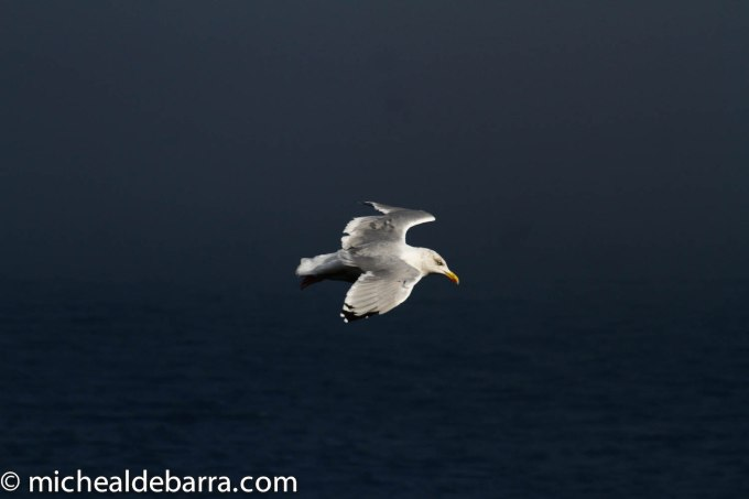 IMG_7403A