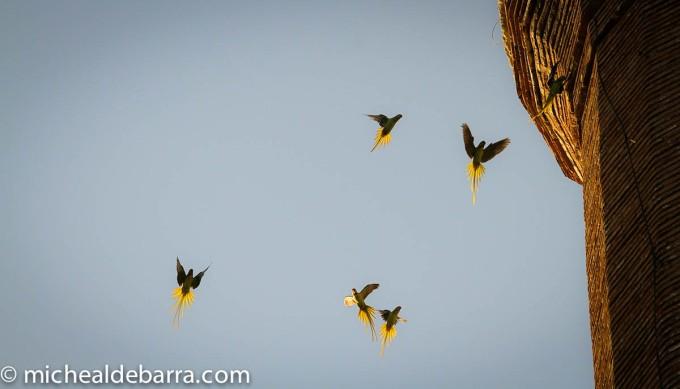Birds Edit